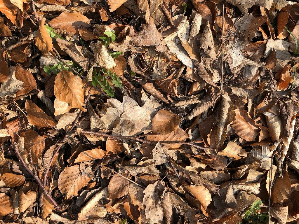 Leaves the most common brown composting material