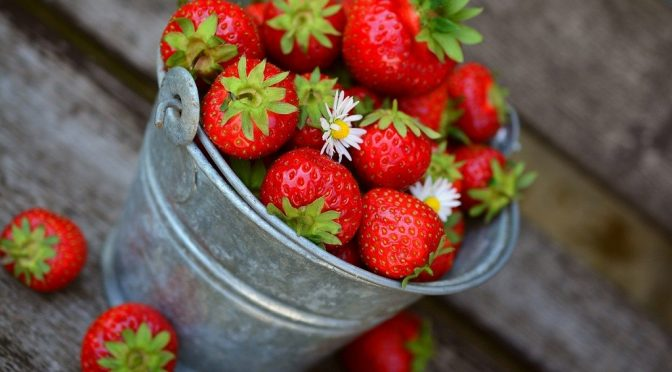 silver bucket of fresh strawberries and a few chamomile flowers