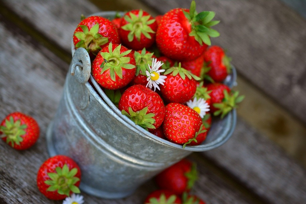 Growing Strawberries – Delicious Fruit Right From Your Backyard