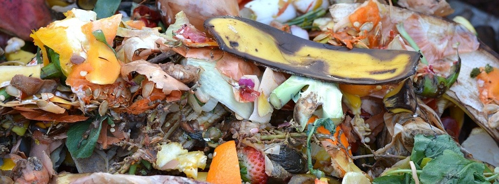 fruit and vegetable scraps ready for the compost pile