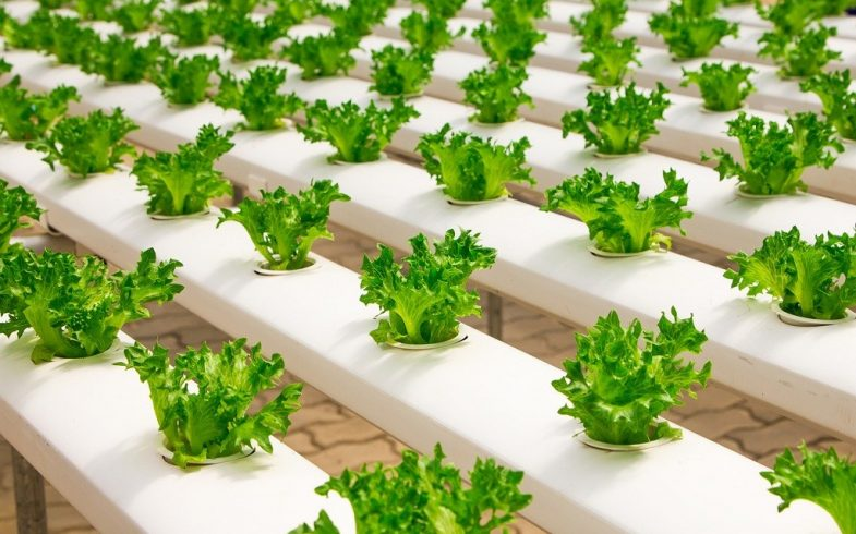 What Is Hydroponic Gardening and Is It Easy Enough for Beginners?
