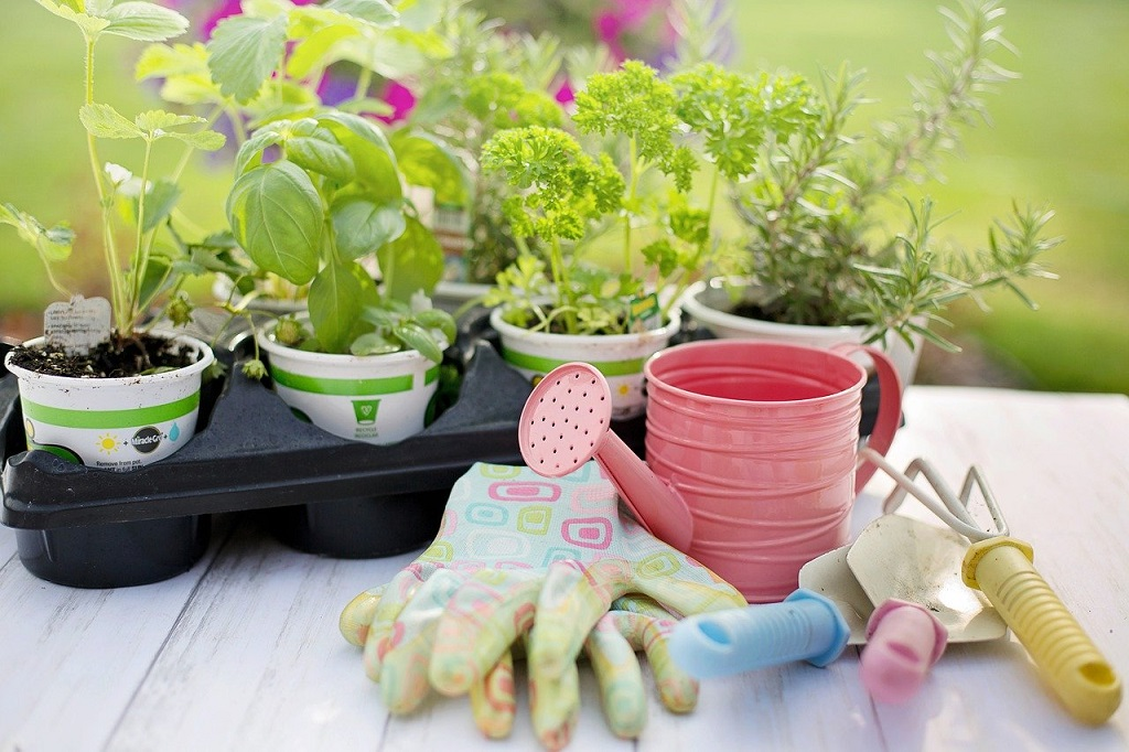 Should You Grow Herbs in Your Backyard Garden?